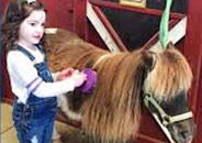 Girl Grooming Horse at Land of Little Horses Animal Theme Park