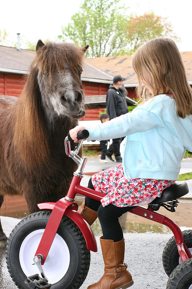 Young Girl Riding Tricycle Near Miniature Horse