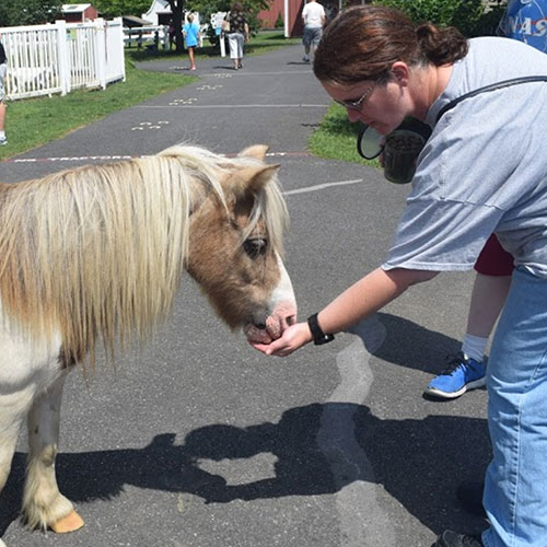 Feeding Miniature Horse at Land of Little Horses Animal Theme Park