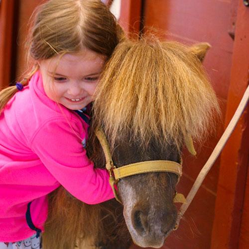 Little Girl Hugging Mini Horse at Land of Little Horses Animal Theme Park