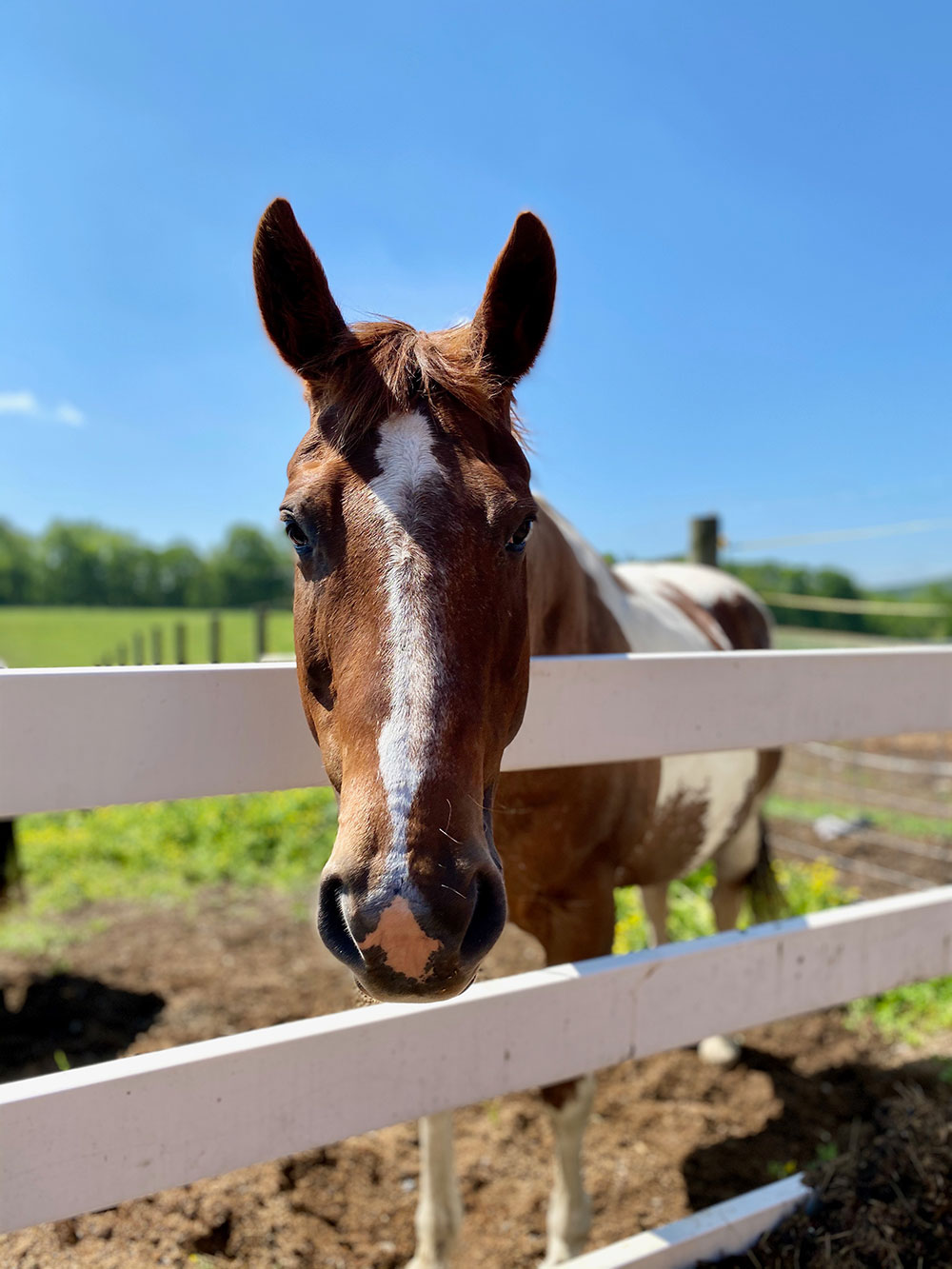 Close Up of Horse at Fence at Land of Little Horses Animal Theme Park