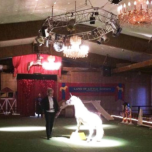Mane Event Performance at Land of Little Horses Animal Theme Park