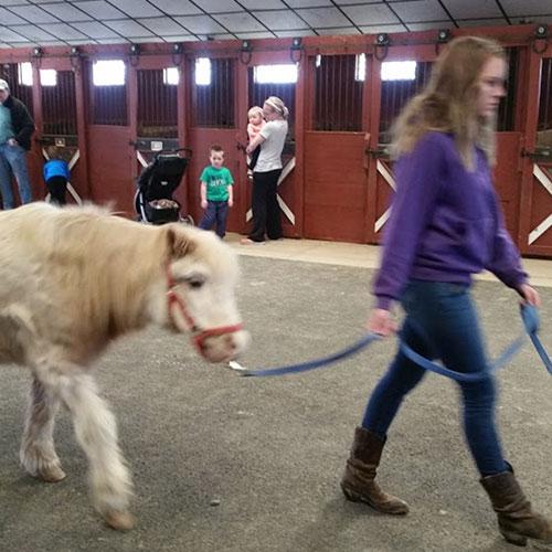 Woman Training Mini Horse at Land of Little Horses Animal Theme Park