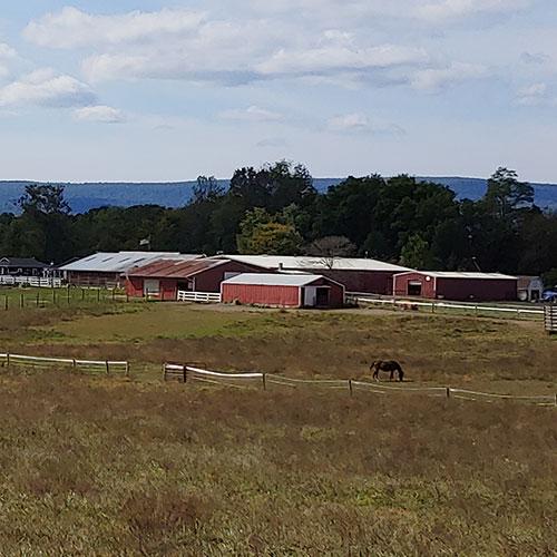 Long Shot of Barns at Land of Little Horses Animal Theme Park